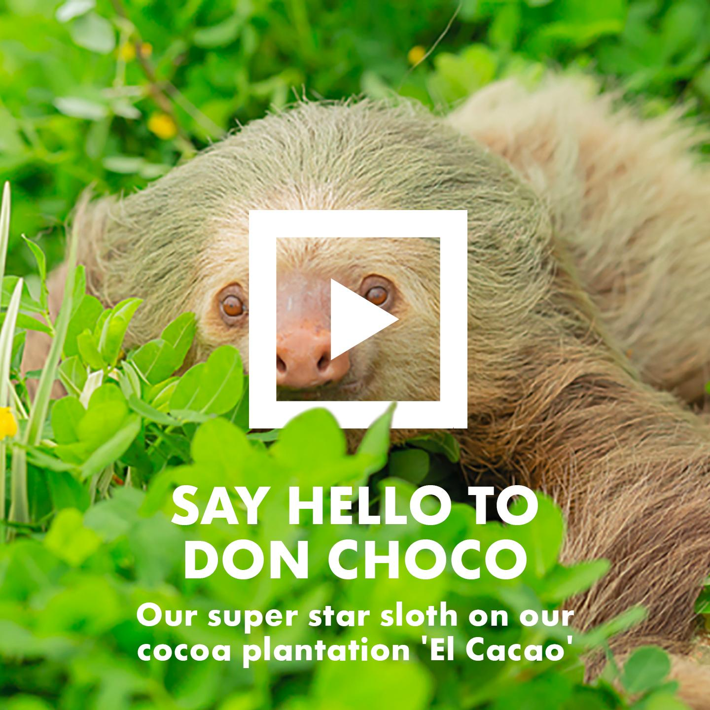 Say Hello To Don Choco. Our super star sloth on our cocoa plantation 'El Cacao'.